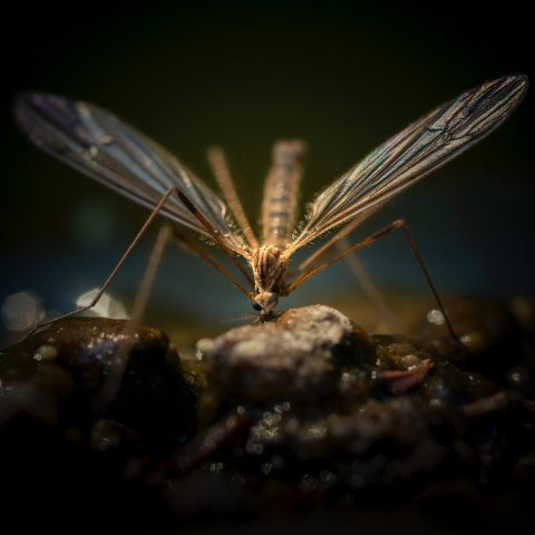 Packing List: 5 Items You Need in Mosquito-Ridden Regions
